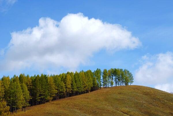 大兴安岭,森林和草原 - 红叶风萧萧  - 红叶风萧萧
